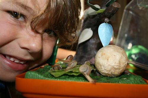 Kye's Snails